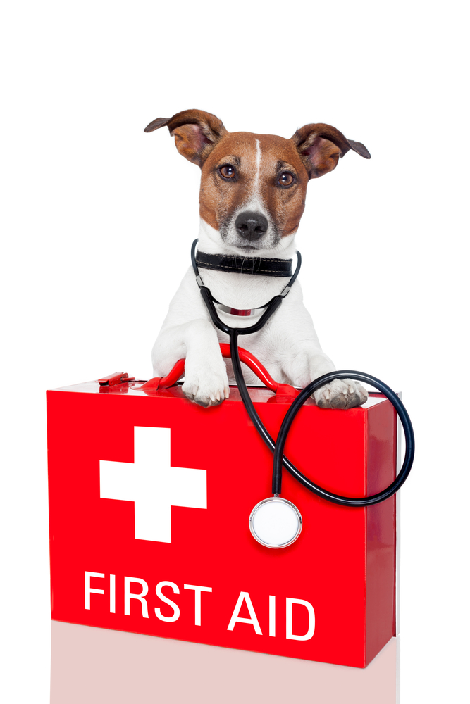 Doggie and Me Pet First Aid & CPR - Pet Training - Anaheim ... |First Aid For Pets Files