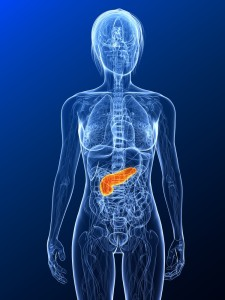 Where is the Pancreas in the body?